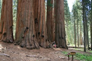 Sequoia National Park, California, 2007